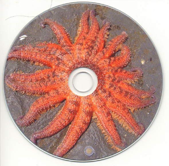 SeashoreLifeofBritishColumbia